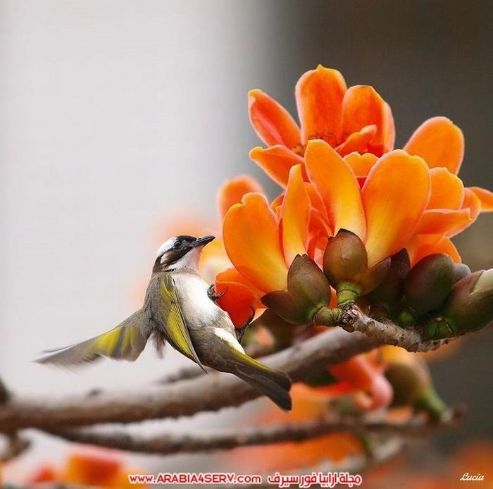 اجمل-و-احلى-صور-عصافير-و-زهور-7