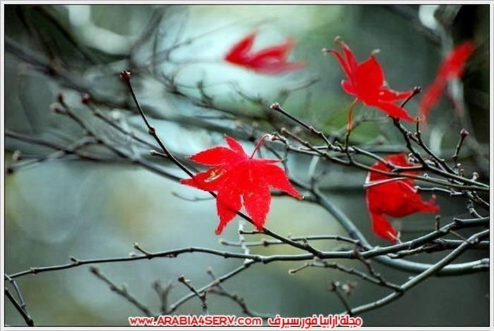 الوان-رائعة-للطبيعة-بالصور-4