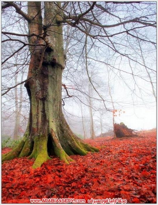 الوان-رائعة-للطبيعة-بالصور-5
