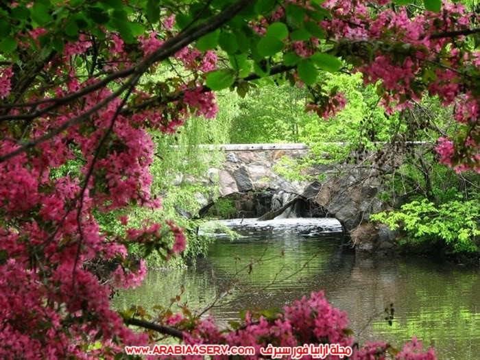 صور-اجمل-جسور-في-العالم-وسط-الطبيعة-2