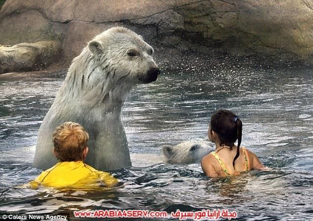 صور-اطفال-يسبحون-بصحبة-الدب-القطبي-1