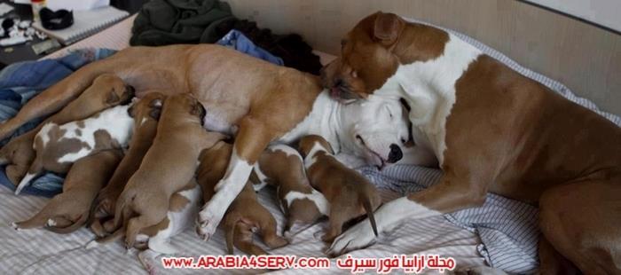 صور-الامومة-عند-الكلاب-1