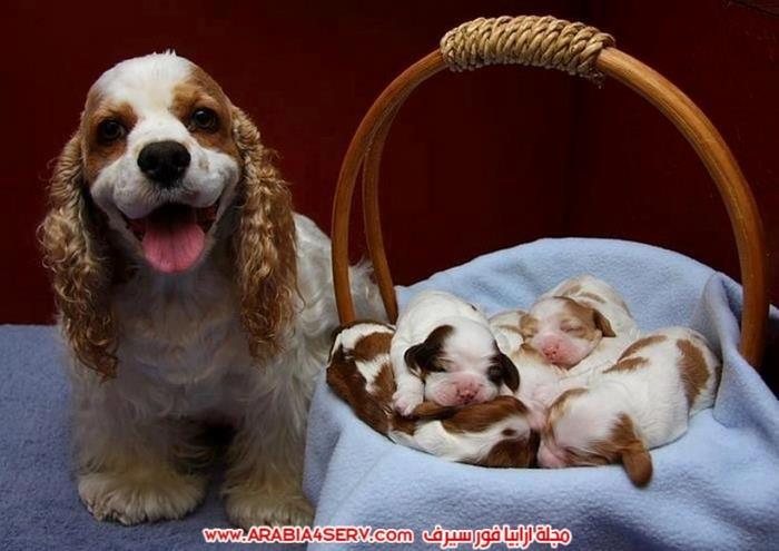 صور-الامومة-عند-الكلاب-4