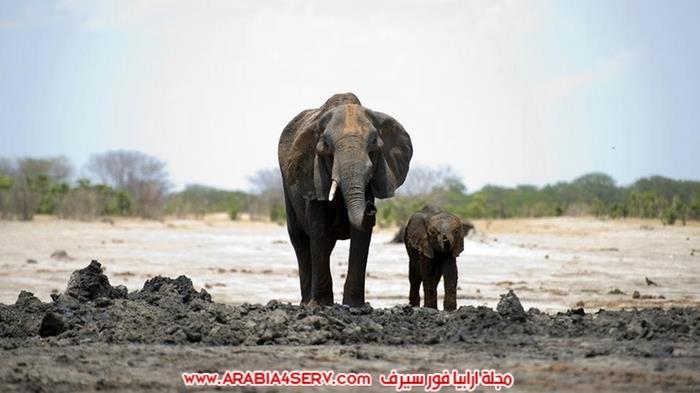 صور-الحياة-البرية-في-زيمبابوي---افريقيا-2