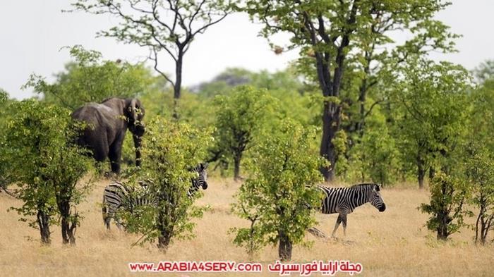 صور-الحياة-البرية-في-زيمبابوي---افريقيا-4