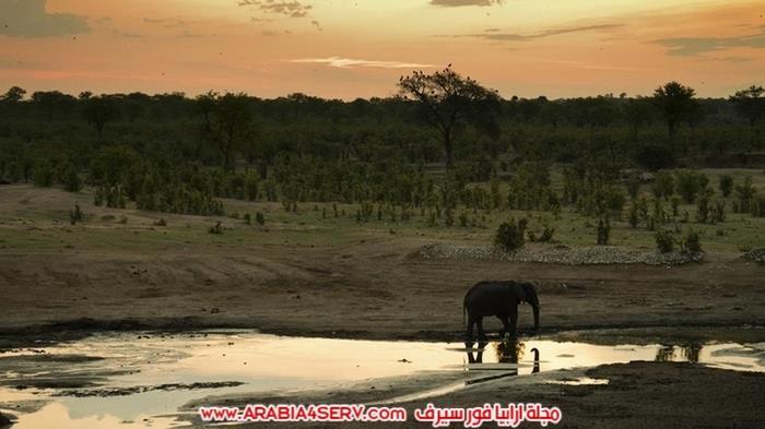 صور-الحياة-البرية-في-زيمبابوي---افريقيا-6