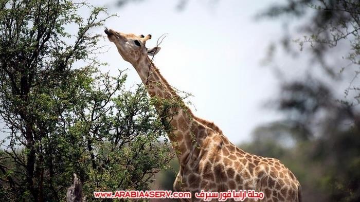 صور-الحياة-البرية-في-زيمبابوي---افريقيا-8