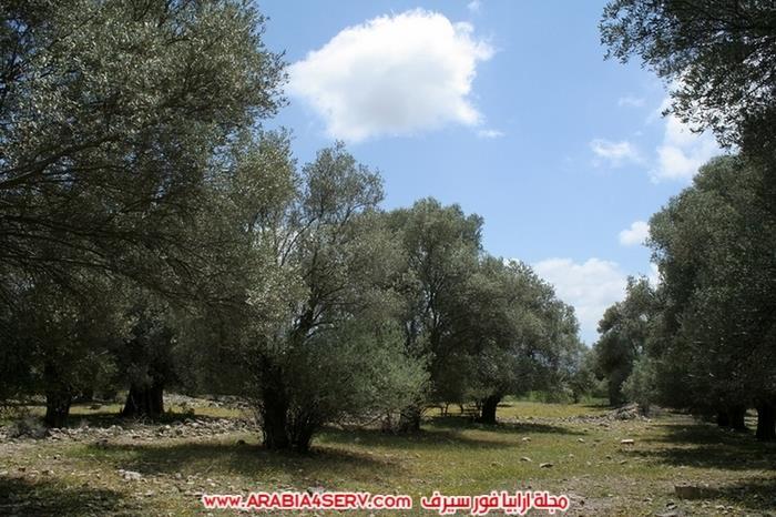 صور-الطبيعة-في-جزيرة-كريت-اليونان-روعة-1
