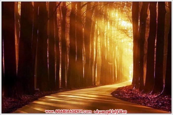 صور-الطبيعة-و-اللون-الذهبي-1