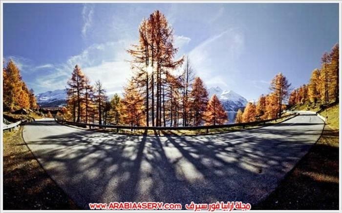 صور-الطبيعة-و-اللون-الذهبي-3