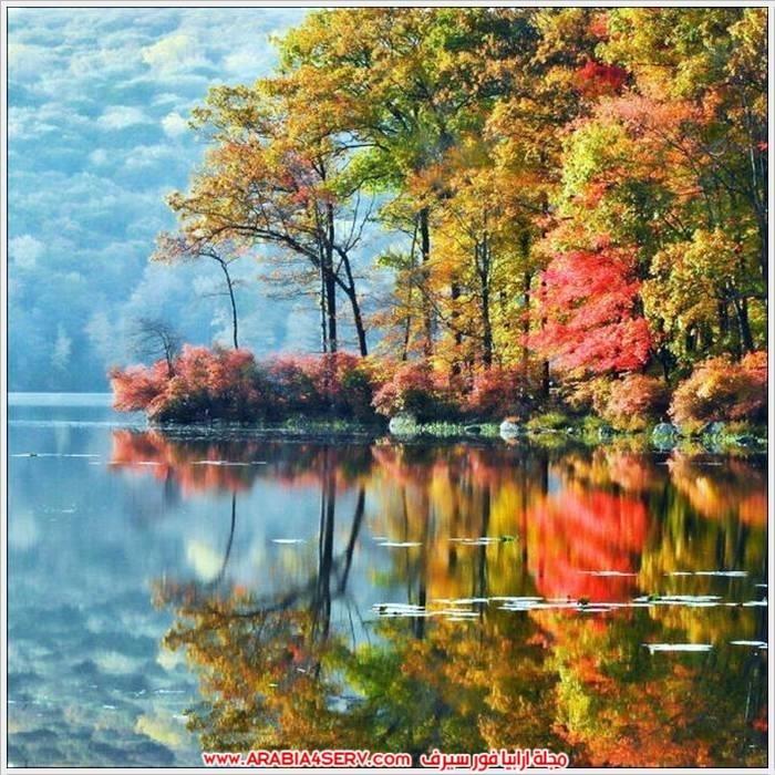 صور-الطبيعة-و-اللون-الذهبي-6