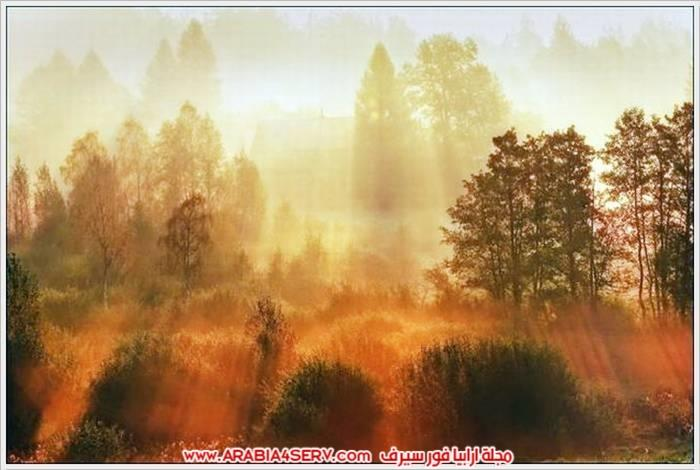 صور الطبيعة و اللون الذهبي