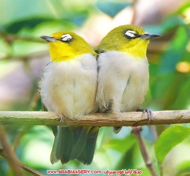 صور-تبرز-روعة-و-جمال-الطيور-1