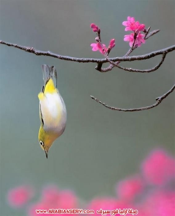 صور-تبرز-روعة-و-جمال-الطيور-10