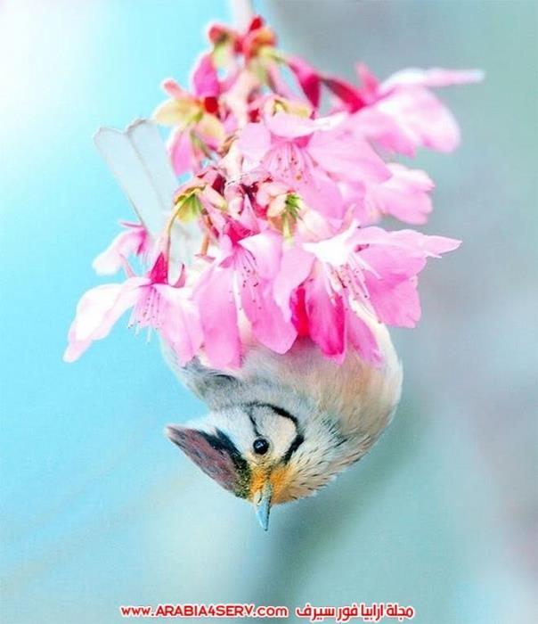 صور تبرز روعة و جمال الطيور