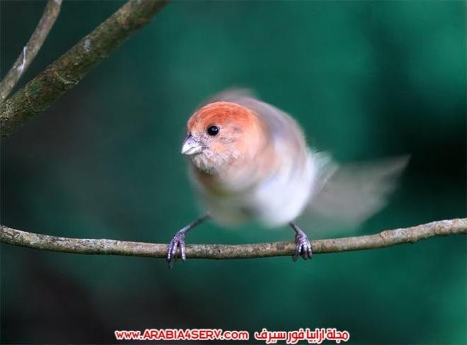 صور-تبرز-روعة-و-جمال-الطيور-12