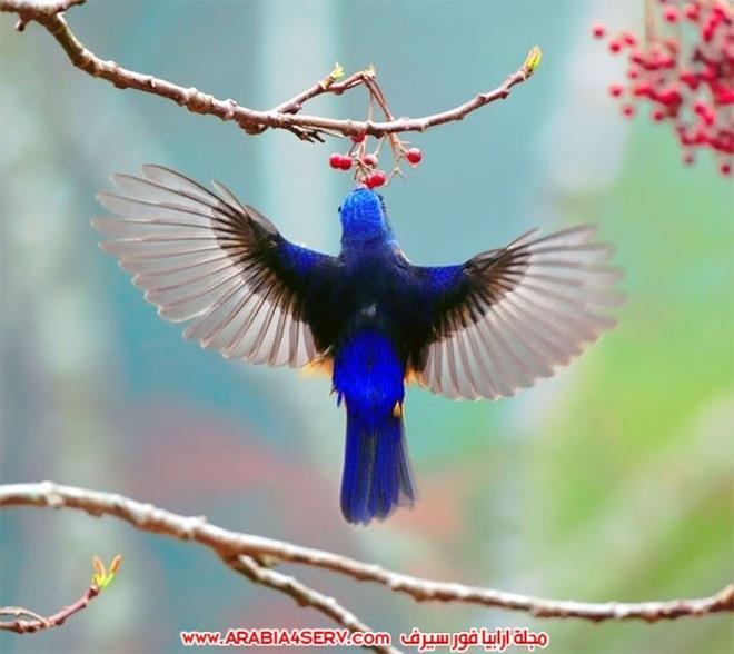 صور-تبرز-روعة-و-جمال-الطيور-2