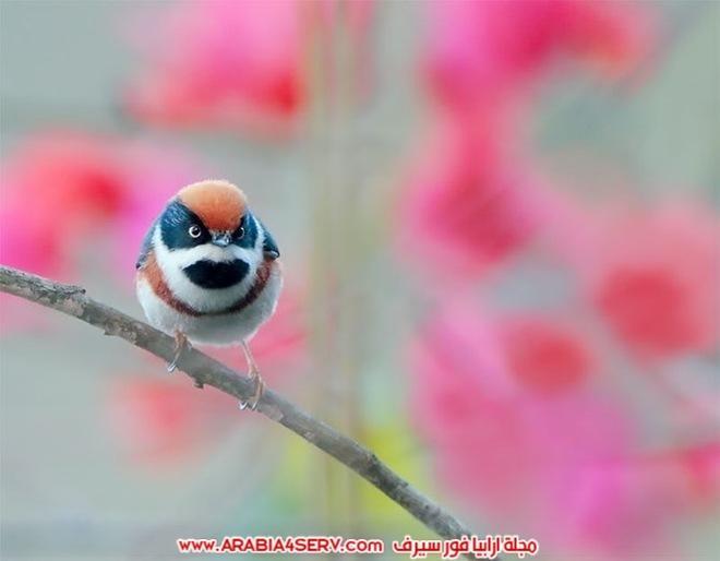 صور-تبرز-روعة-و-جمال-الطيور-3