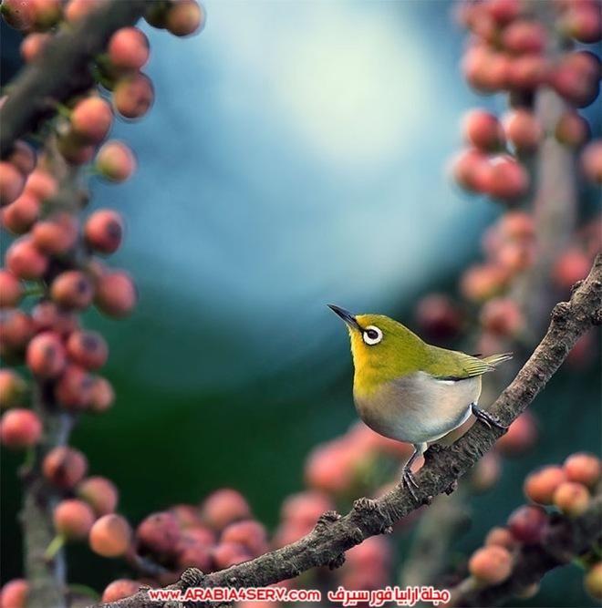 صور-تبرز-روعة-و-جمال-الطيور-7
