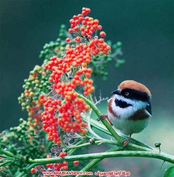 صور-تبرز-روعة-و-جمال-الطيور-8