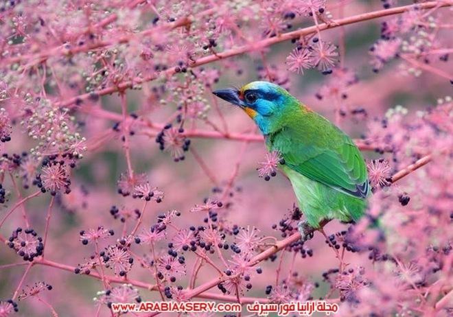 صور-تبرز-روعة-و-جمال-الطيور-9