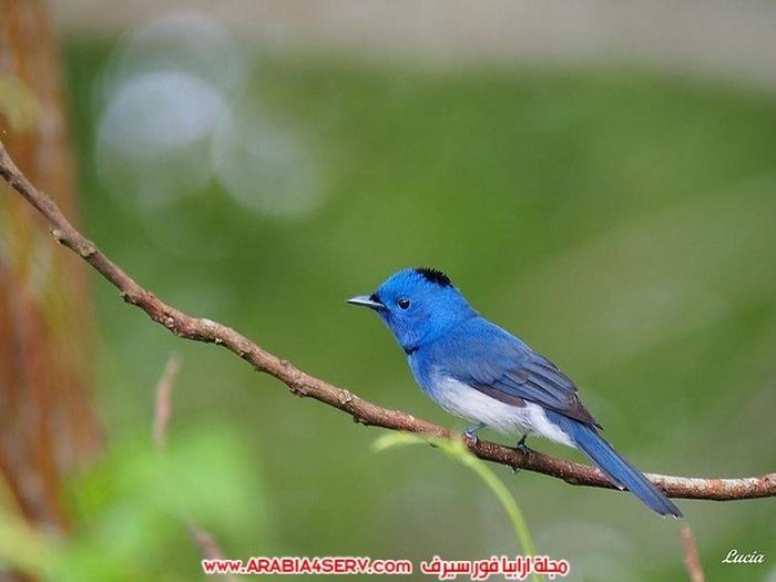 صور-طيور-عصافير-و-زهور-طبيعية-جميلة-جدا-1