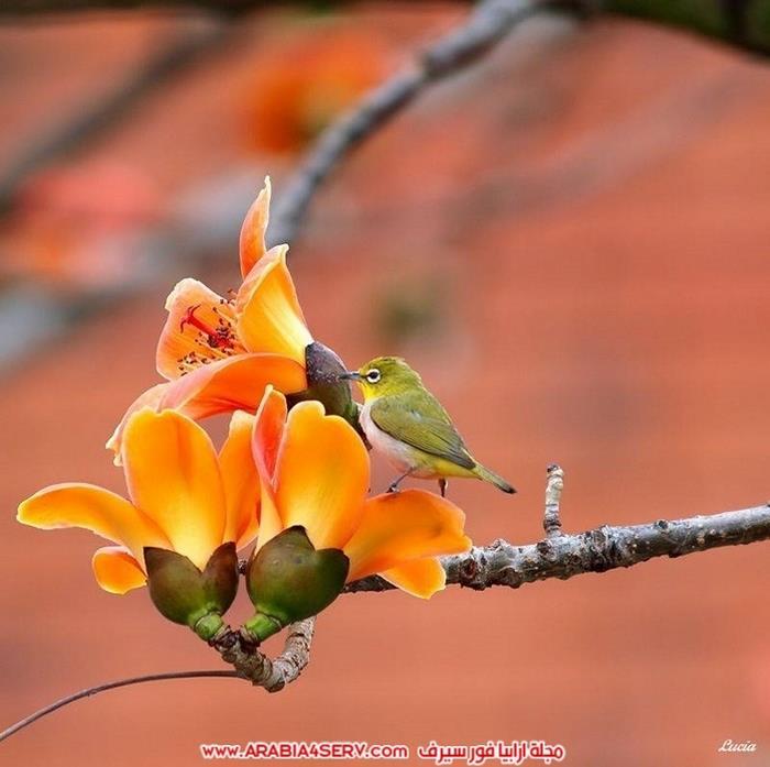 صور-طيور-عصافير-و-زهور-طبيعية-جميلة-جدا-10