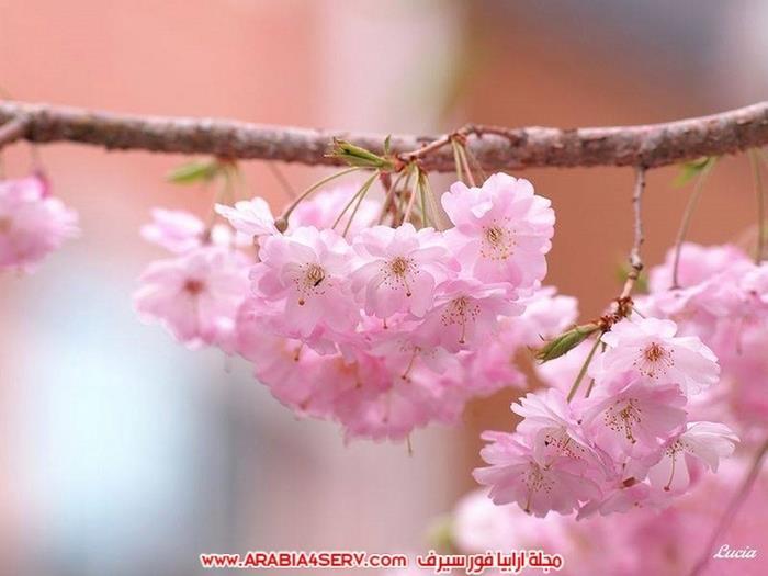صور-طيور-عصافير-و-زهور-طبيعية-جميلة-جدا-6
