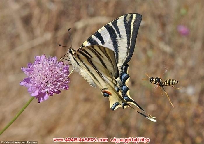 صور-عجائب-و-غرائب-الطبيعة-4