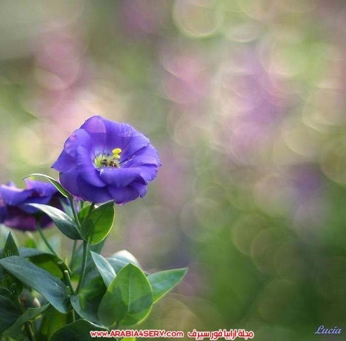 صور عصافير وزهور جميلة جدا تحفة