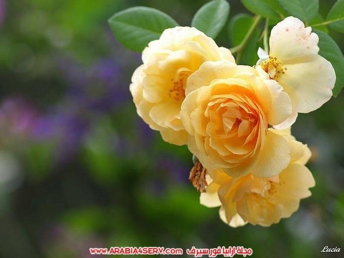 صور-عصافير-وزهور-جميلة-جدا-تحفة-12