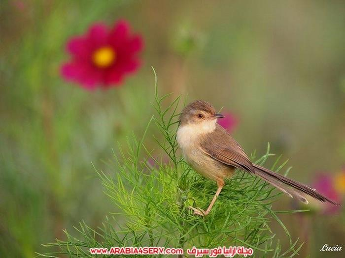 صور-عصافير-وزهور-جميلة-جدا-تحفة-2