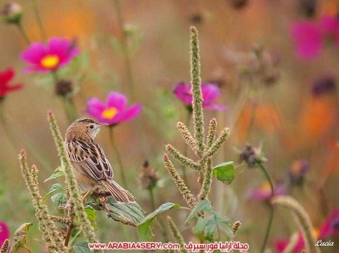 صور-عصافير-وزهور-جميلة-جدا-تحفة-4