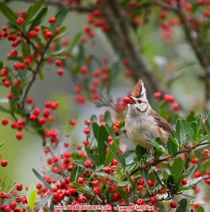 صور-عصافير-وزهور-جميلة-جدا-تحفة-6