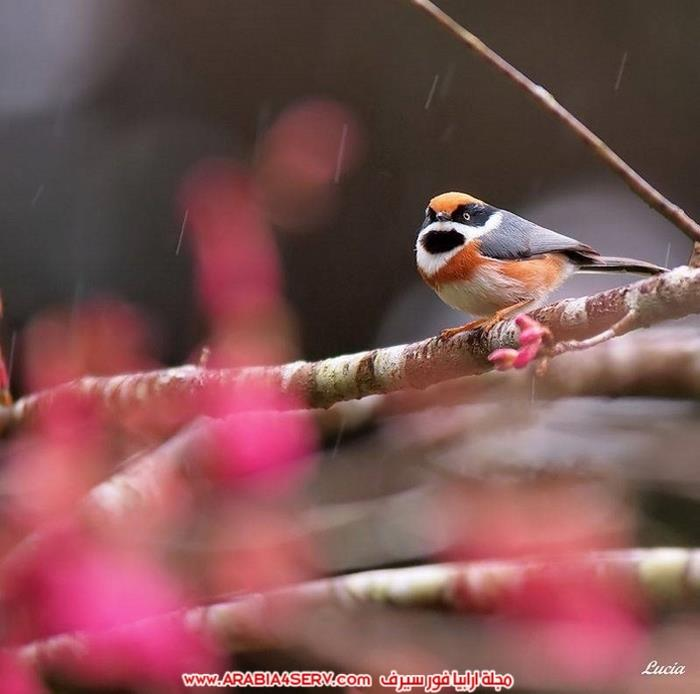 صور-عصافير-وزهور-جميلة-جدا-تحفة-7