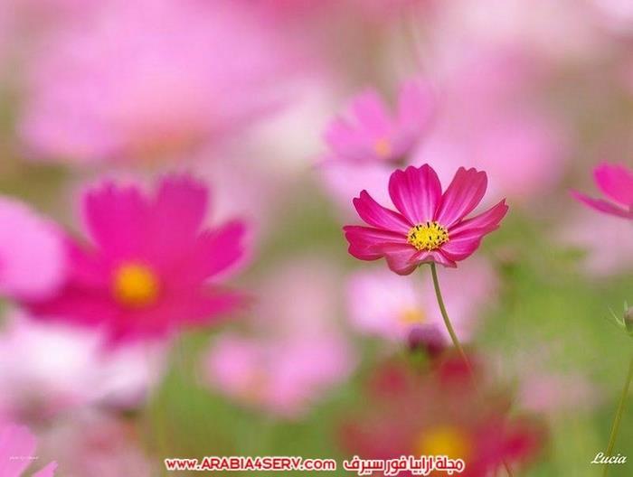 صور-عصافير-وزهور-جميلة-جدا-تحفة-8