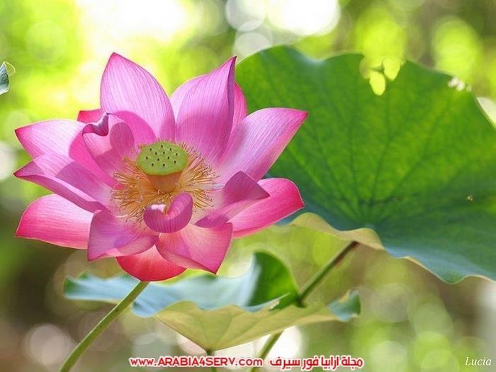 صور-عصافير-وزهور-جميلة-جدا-تحفة-9