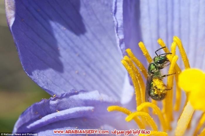 صور-غرائب-و-عجائب-الطبيعة-9