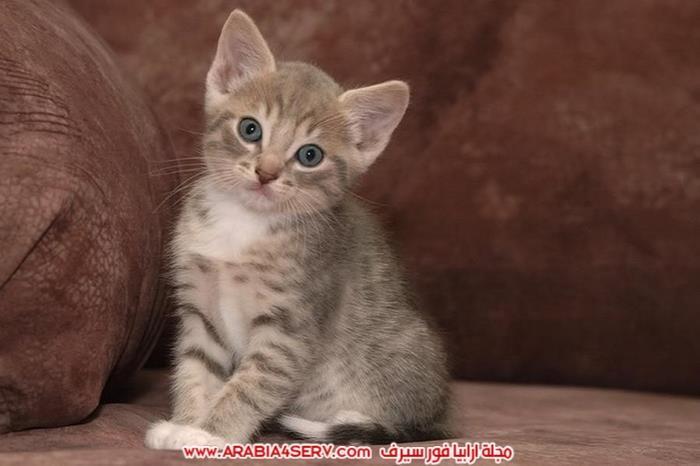 صور-قطط-اجمل-احلى-اروع-صور-قطط-2