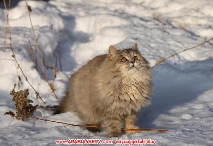 صور-قطط-اجمل-احلى-اروع-صور-قطط-3