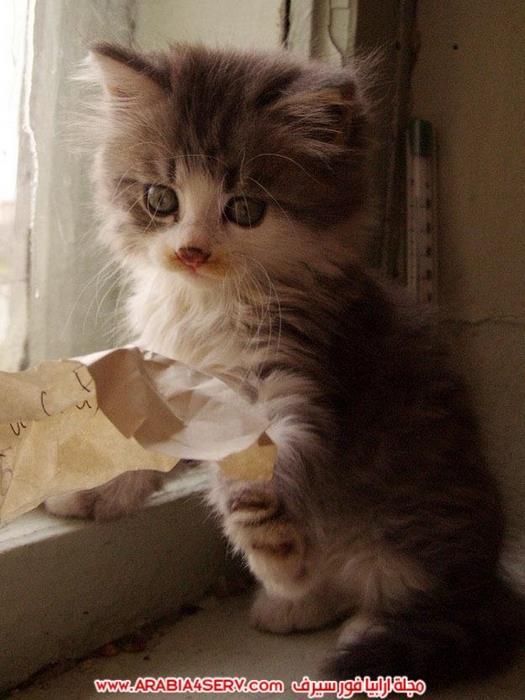 صور-قطط-اجمل-احلى-اروع-صور-قطط-4