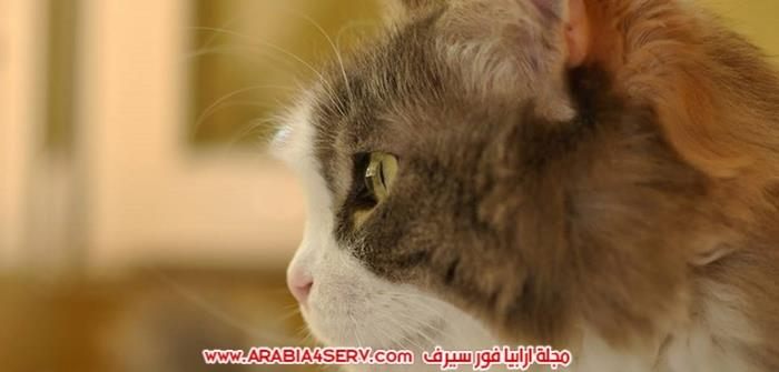صور-قطط-اجمل-احلى-اروع-صور-قطط-6