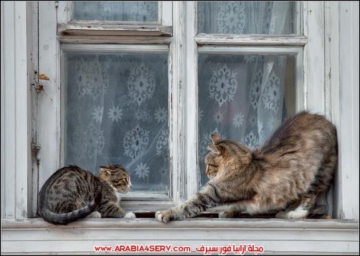 صور-قطط-طريفة-جميلة-كيوت-اوي-روعة-1