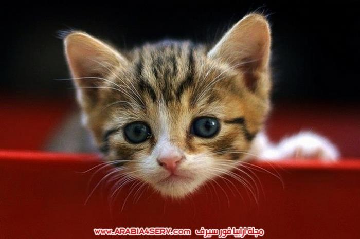 صور-قطط-طريفة-جميلة-كيوت-اوي-روعة-11