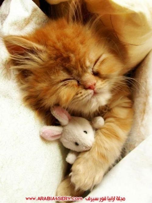 صور-قطط-طريفة-جميلة-كيوت-اوي-روعة-4