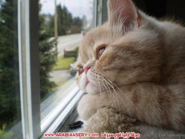 صور قطط طريفة جميلة كيوت اوي روعة