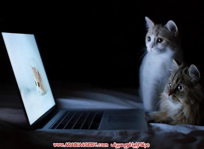 صور-قطط-كبلز-جميلة-روعة-رومانسية-كيوت-1