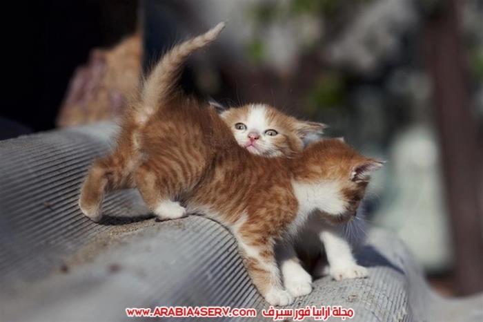 صور-قطط-كبلز-جميلة-روعة-رومانسية-كيوت-8