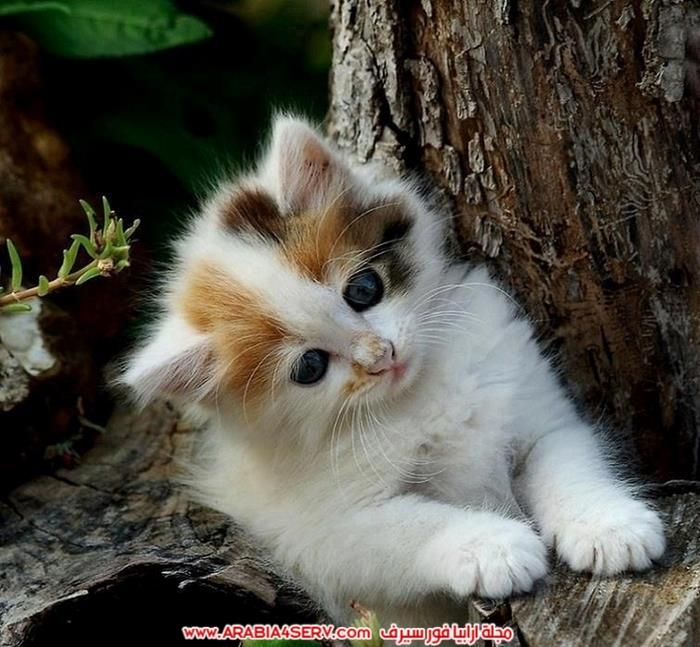 صور-قطط-متنوعة-مميزة-جميلة-جدا-1