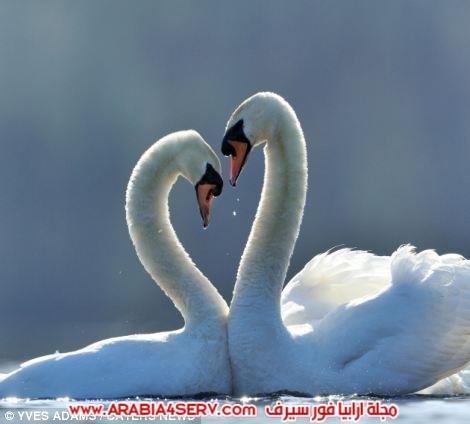 صور-قلوب-طبيعية-1